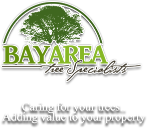 Bay Area Tree Specialist