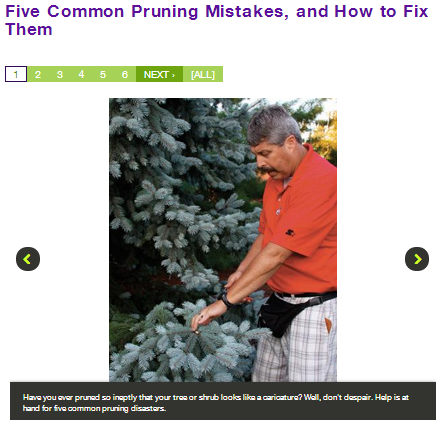 five-common-pruning-mistakes