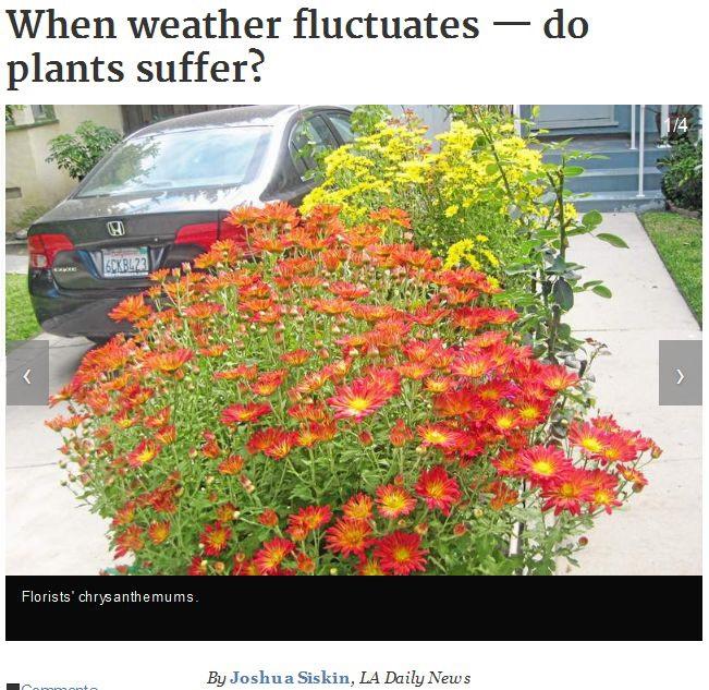 Plants-Suffer