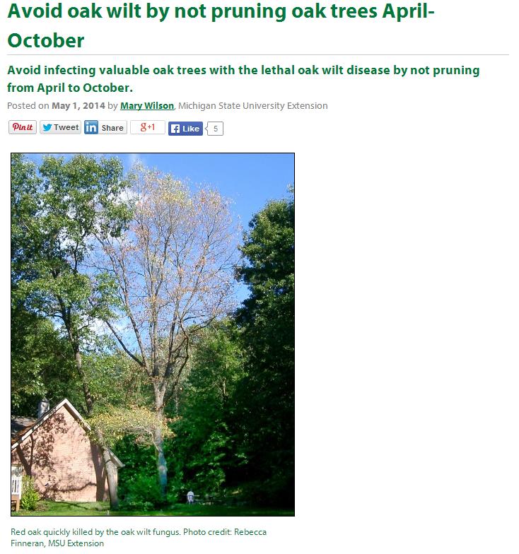 Pruning-Oak-Trees