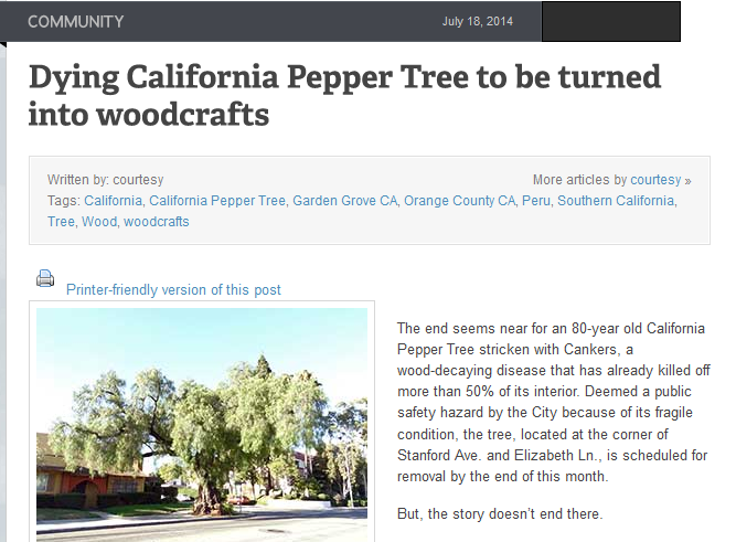 dying-california-pepper-tree-to-be-turned-into-woodcrafts