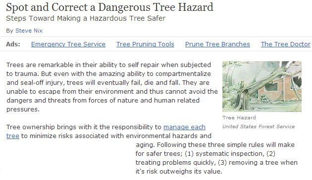 proper-tree-care-in-palo-alto-helps-reduce-tree-diseases-and-hazards