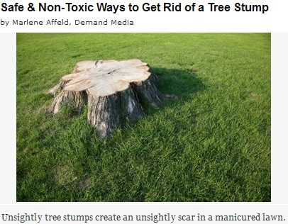 safe-and-non-toxic-ways-to-get-rid-of-a-tree-stump