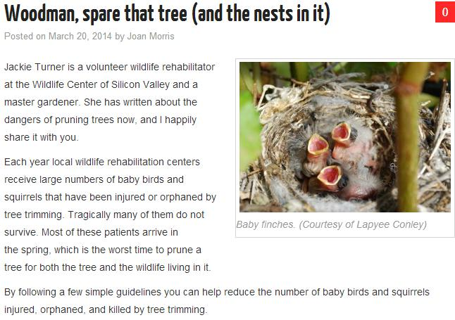 san-jose-tree-care-in-spring-requires-careful-planning-experts-say