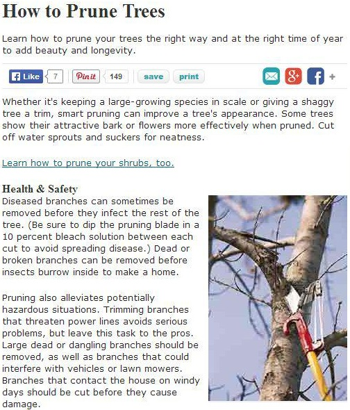 san-jose-tree-service-maintenance-tips-general-tree-pruning-basics