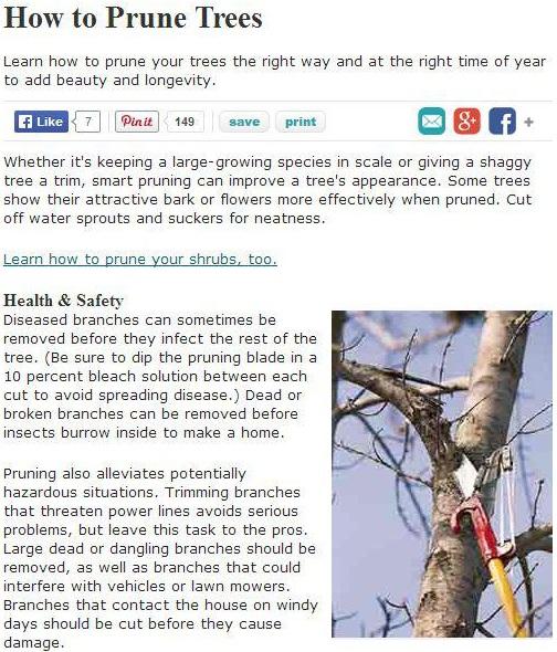 san-jose-tree-service-maintenance-tips-general-tree-pruning-basics
