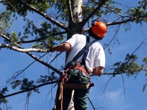 Tree Service San Jose