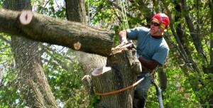 Tree Removal San Jose